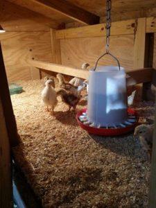 chickcoop