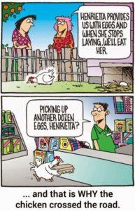 chickeneggs
