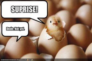 chicksurprise