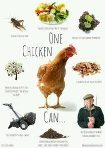 chickhelp