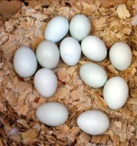 eggsday10
